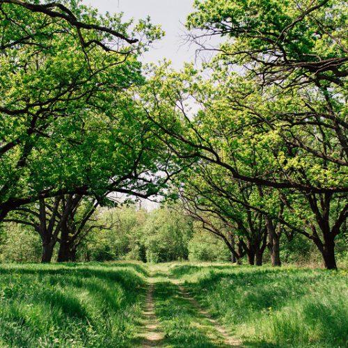 Natur pur - Rausgehen und mit der Natur verbinden Folge 69